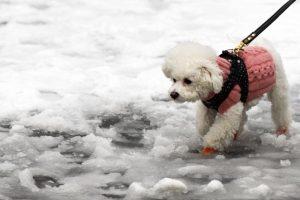 Is rock salt safe for dogs?
